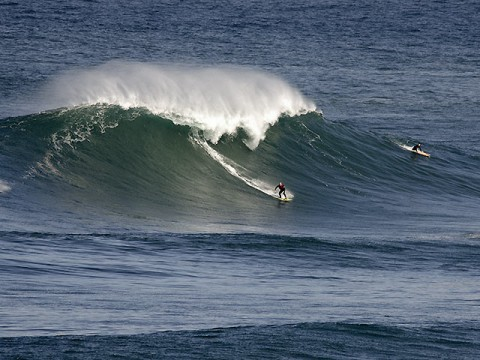 Long Reef bombie, May 2011 (Don Norris photo)