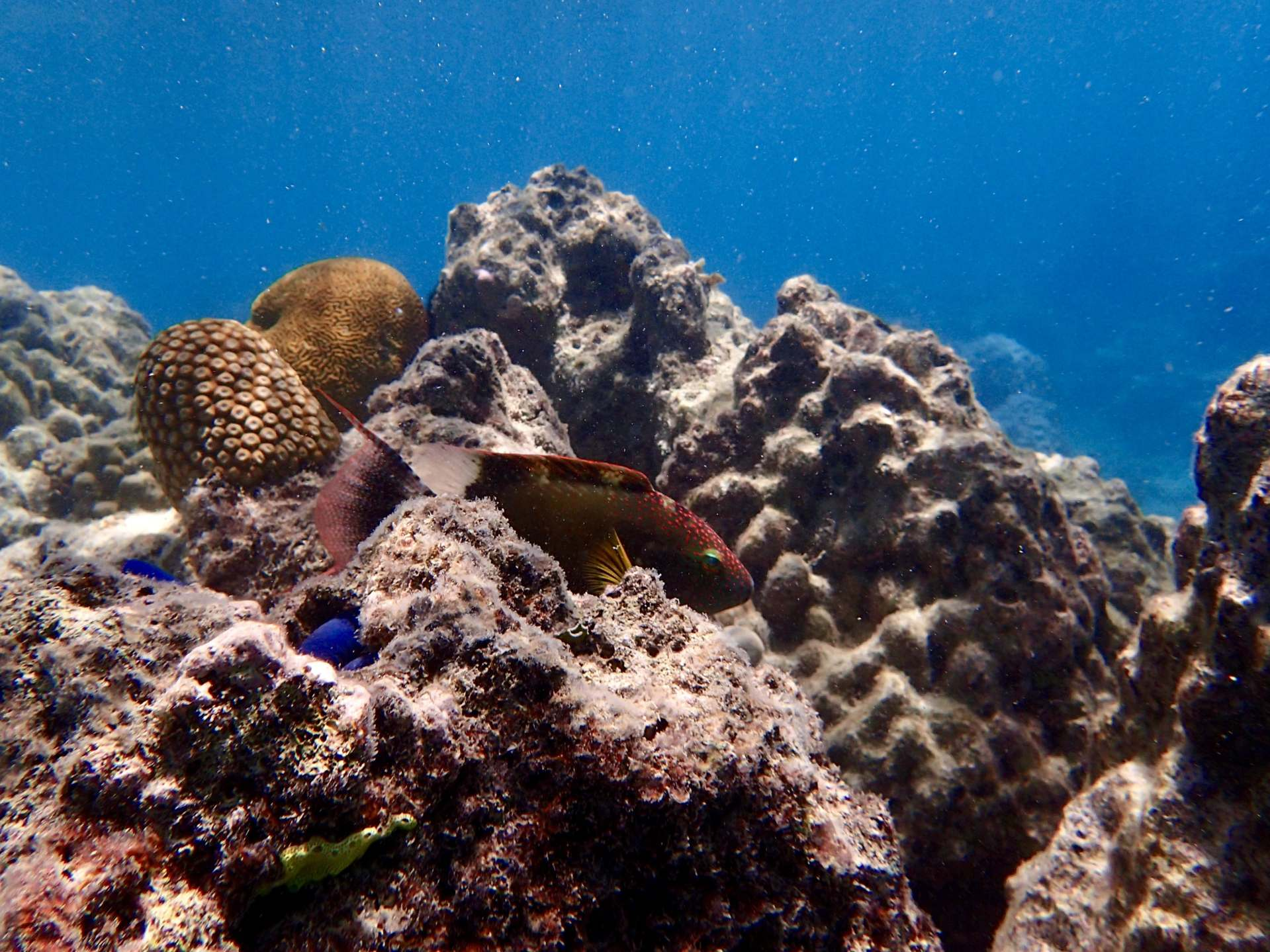 tropical fish in coral
