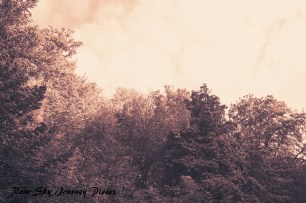 'Canopy glow.' Photography and edit by Rose-Sky Journey Pieces. Copyright 2016.