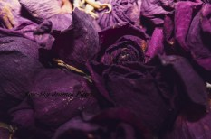 'Purple Decay.' Photography by Rose-Sky Journey Pieces. 2017.