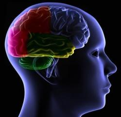 120086-352x341-Autism_brain_heal