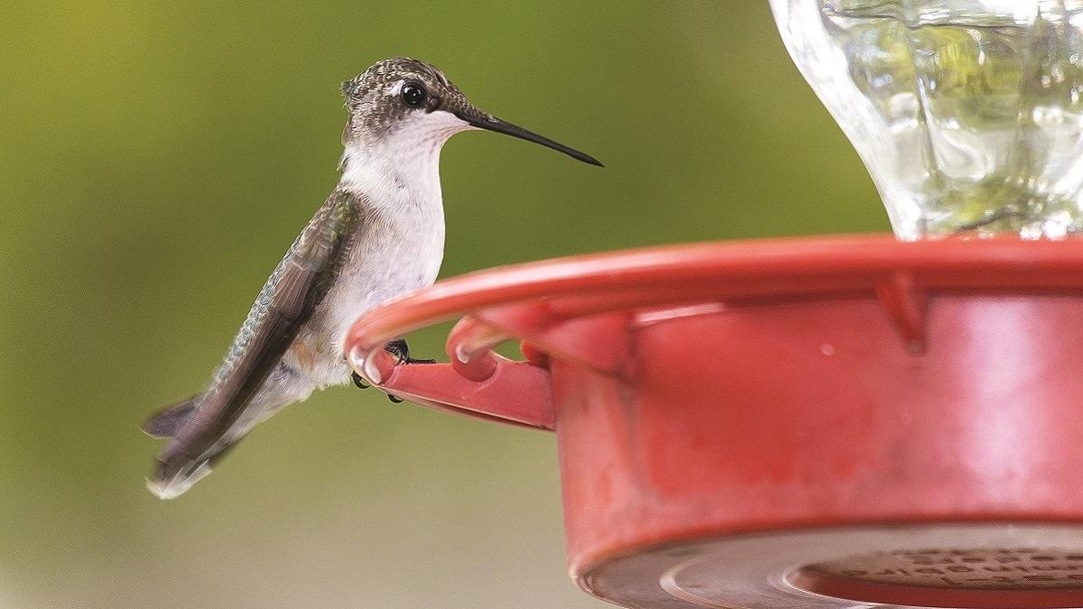 Interest in backyard birdwatching takes wing in Alabama