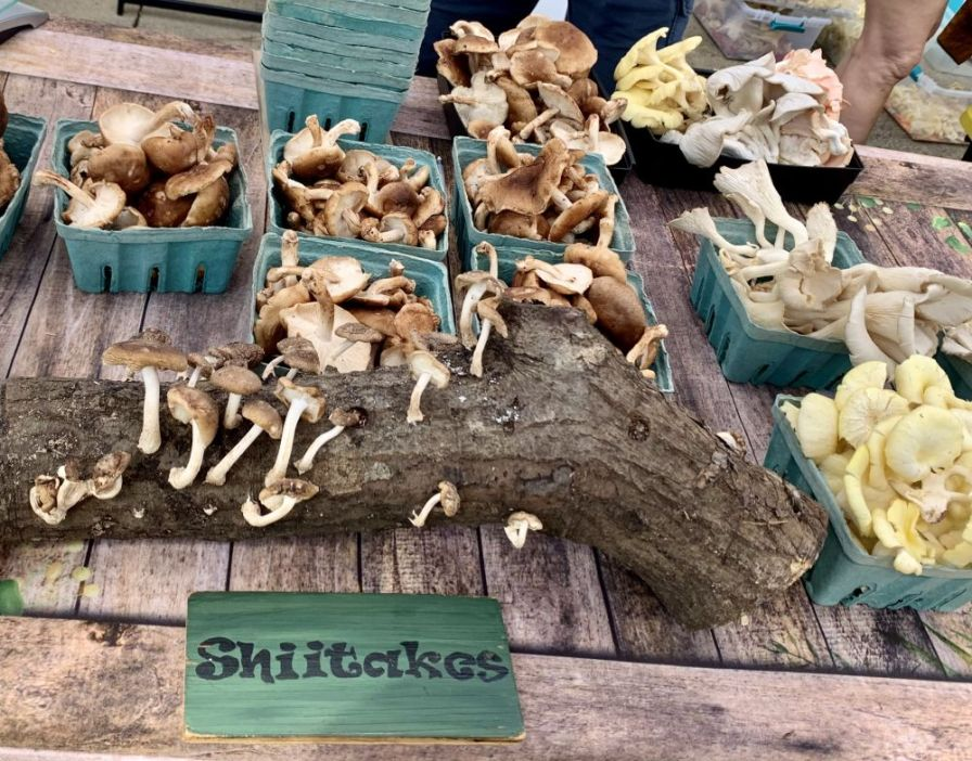 The shiitake logs are in high demand at the Market at Pepper Place. (Donna Cope / Alabama NewsCenter)