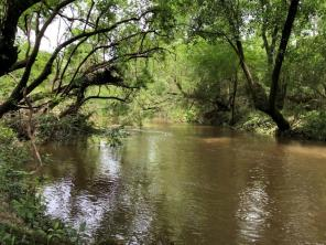 The South Alabama Land Trust maintains and protects the 60-acre Alta Fish River Nature Preserve. (SALT)