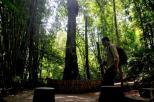 misteri di balik pesona pohon Tarra (12)
