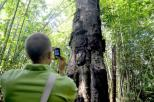 misteri di balik pesona pohon Tarra (5)