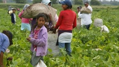Photo of Trabajo infantil, asignatura sin erradicar que afecta a 3.2 millones