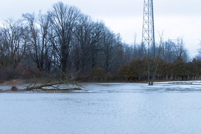 Weather Creek Hourly Oak