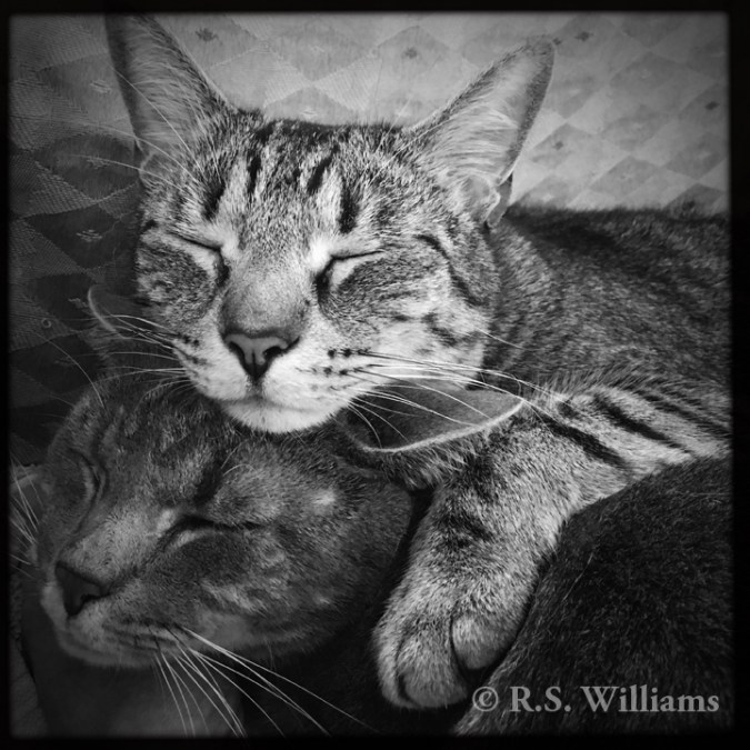 Black-and-white digital photo of two gray tabby (striped) cats asleep, one atop the other. The lower cat's stripes are two shades of dark gray, for a foggy/cloudy effect; the upper cat's stripes are black on gray/brown fur, and stand out more starkly. Both are sound asleep with eyes closed and ears relaxed, despite the camera so close to their faces.