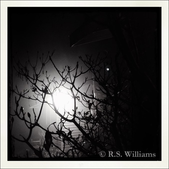 Dramatic (high contrast) black-and-white photo of a dark night sky, with a thick, foggy halo of light shining from behind the jagged black branches of a small tree. In the background, we see the ghostly exterior corner of a small clapboard house and the utility pole next to it.