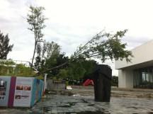 Einige Bäume vor dem Kunstmuseum stehen nun waagerecht