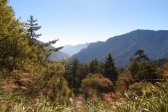 Je näher wir den 3000 Metern kamen, desto alpiner wurde die Vegetation. In der klaren Bergluft konnte man deutlich die Nadelbäume riechen.