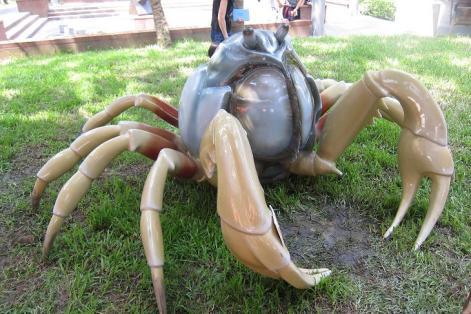 armée et crabe