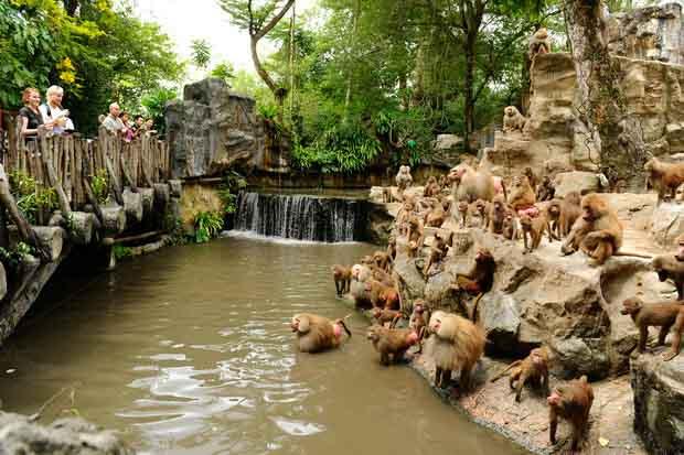 Сингапурский зоопарк предстанет в новом свете по случаю своего 45-летия