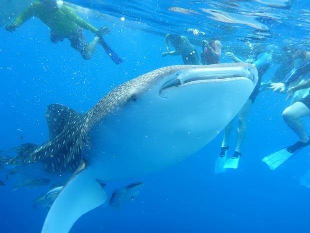 Пуститься вплавь с акулами? Да запросто!