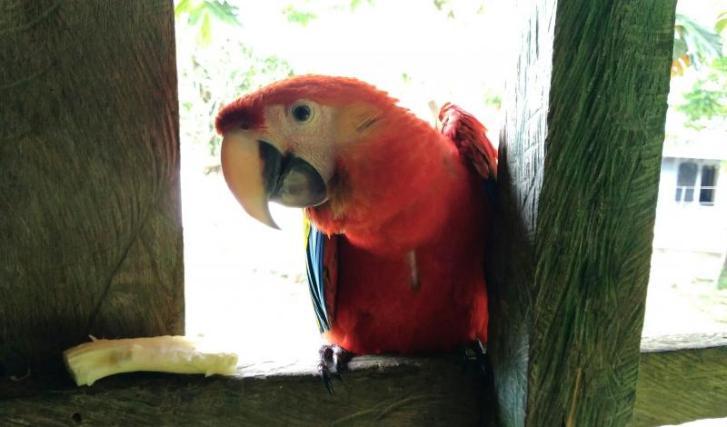 La fauna en sana convivencia con los habitantes de Puerto Puntales. Foto: Mauricio Orjuela.