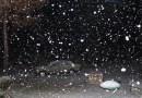 HMZ: Sneg ne prestaje, bićemo potpuno zavejani do kraja dana