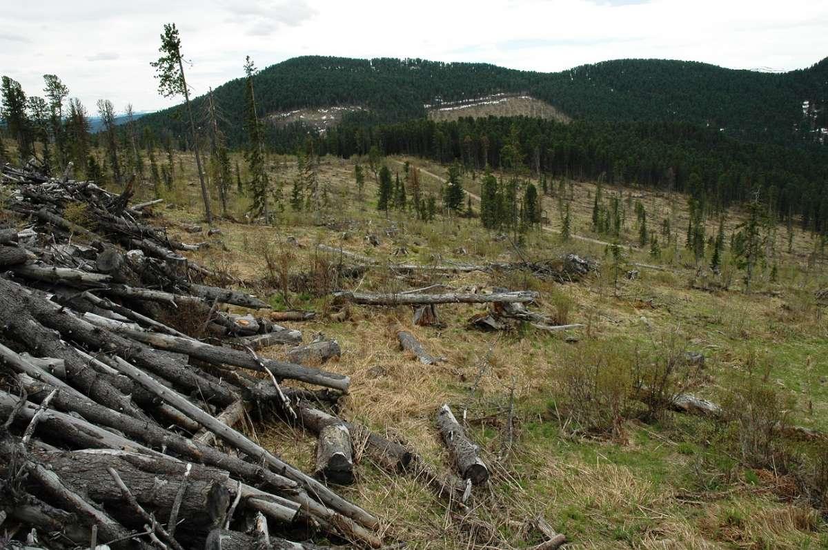 Лес на Дальнем Востоке варварски уничтожается, внукам останется пустыня