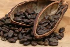 Kakao-ili-kak-rastjot-shokolad