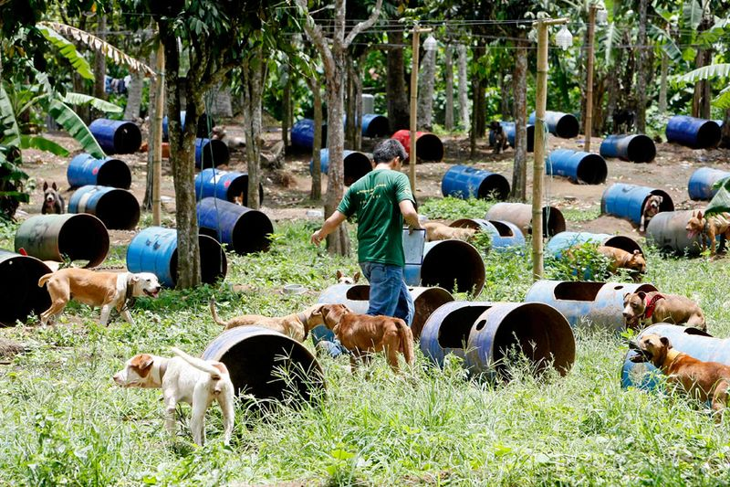 На Филиппинах защитники животных обнаружили собачий концлагерь (17 фото)