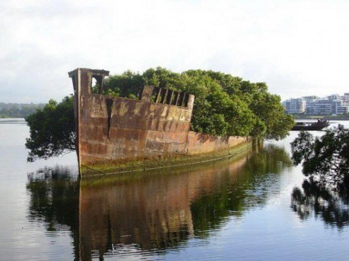 корабль, плавающий лес, австралия