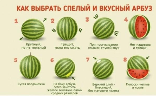 Как выбрать сладкий арбуз без нитратов - Русские Афины ...