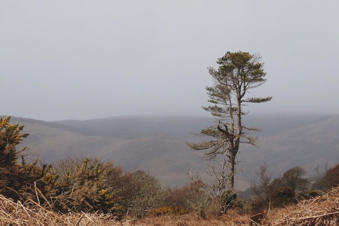 tree in glen saddell