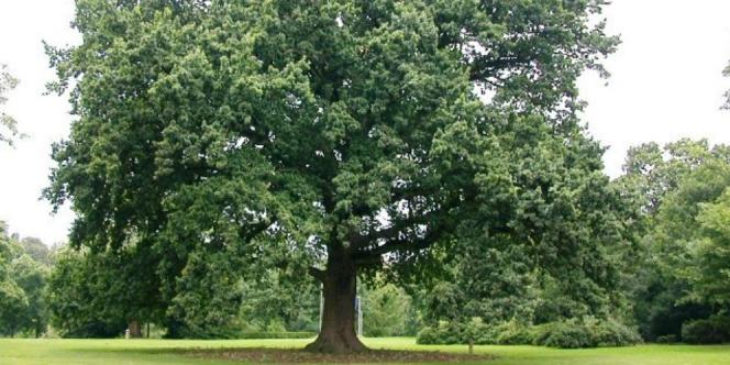 Istilah Di bawah Pohon Rindang (DPR) di Kampus