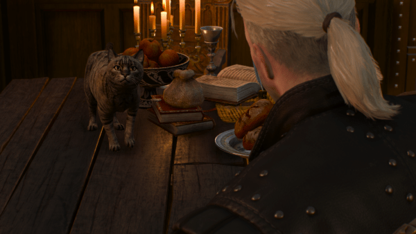 Nibbles_the_cat_looks_at_Geralt