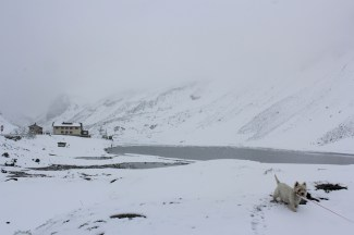 June snow at Flüelapass
