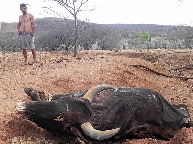 Efeitos da seca no Cariri (Foto: Arquivo - Taiguara Rangel/G1 PB)