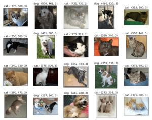 Cats vs Dogs Dataset Data