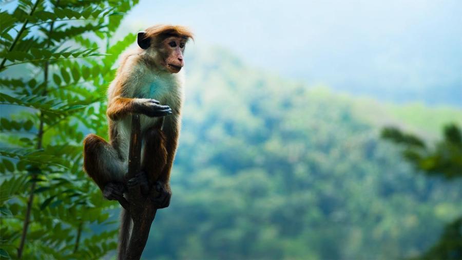 Kebun Binatang Di Indonesia 5 Terfavorit
