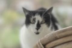 velvet-cat-spy