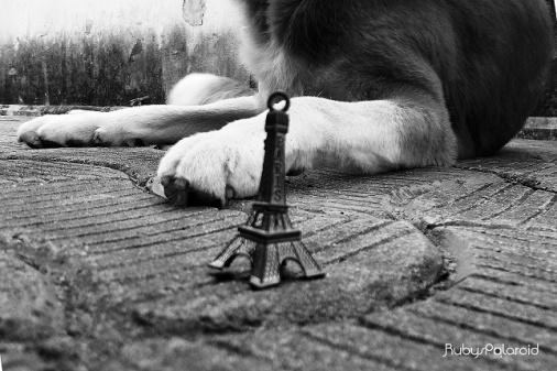 miniature Eiffel tower and a dog Sphinx by rubys polaroid