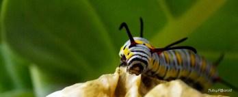 Caterpillar by rubys polaroid