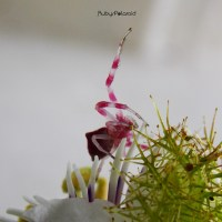 Creepy Pink Spider