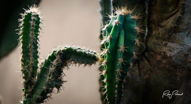 Cactus Dance by rubys polaroid