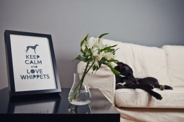 Keep calm and love whippets
