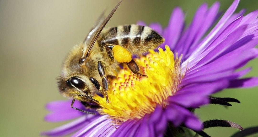 Le rucher du Marandou est sur la toile pour vous souhaiter ses meilleurs vœux pour 2018 !!!