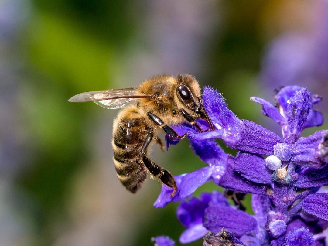 parrainage abeille2 le rucher du marandou