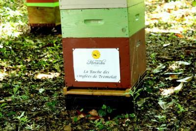 parrainer ruche - rucher de marandou