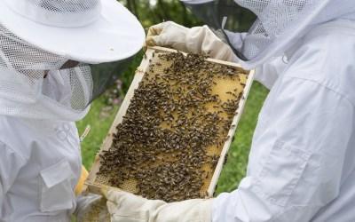 Cycle de conférences : de la ruche au pot de miel