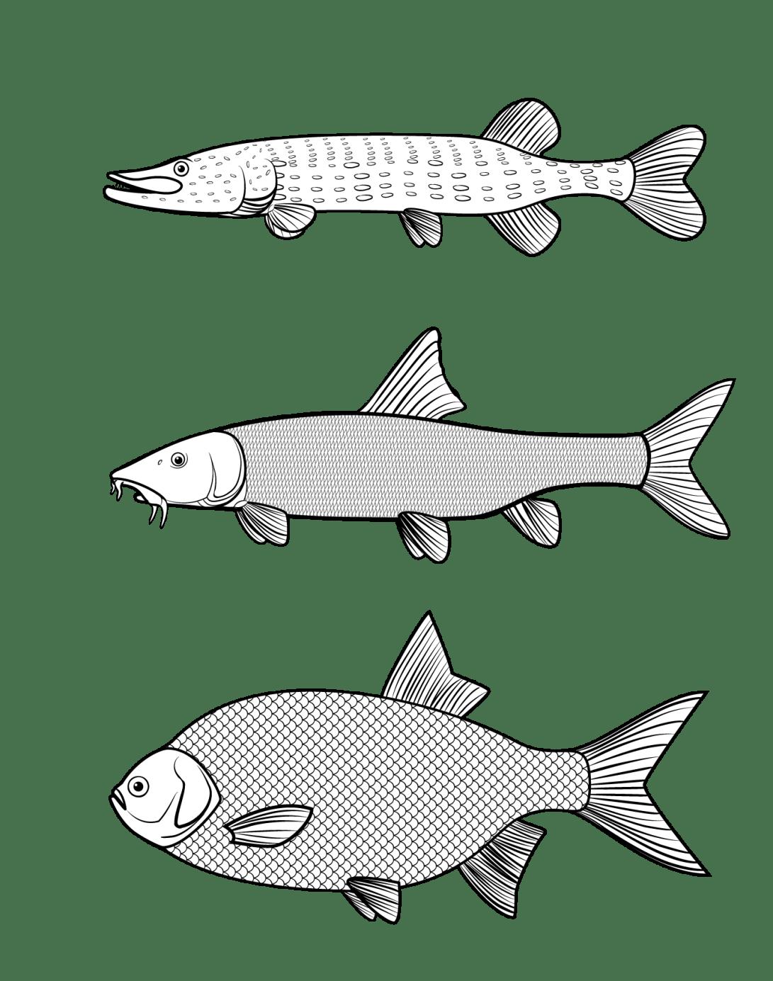 Fisch Vektorgraphik