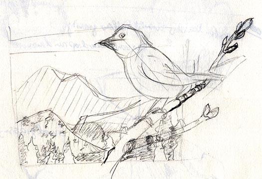 conceptual sketch for song sparrow