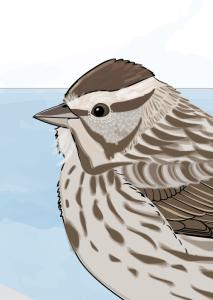 Thumbnail song sparrow