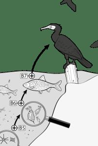 Infografik - Oekosystem See