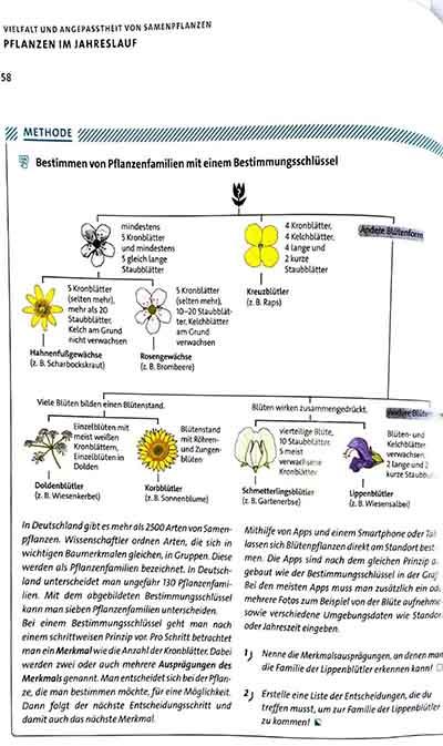 Final illustration shown as figure in biology textbook (i.e. Biosphäre. Cornelsen Verlag GmbH, Berlin).