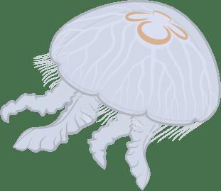 Detailed view of female medusa