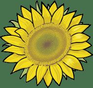 Detail - Family Compositae (sun flower)